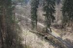 Pěstební opatření v lesoparku Lorenzovy sady - Třebíč