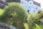 Zpracování návrhu zahradních úprav - FOKUS Vysočina