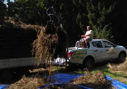 Likvidace biomasy