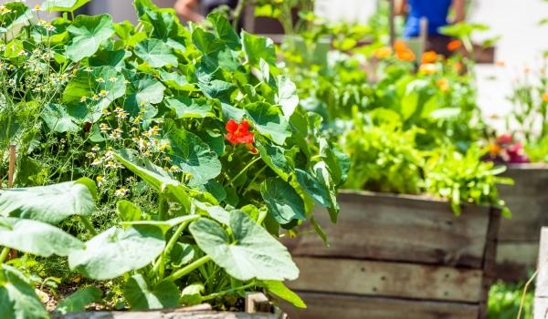 Jak na vysoké záhony - Zahrada u řeky Třebíč