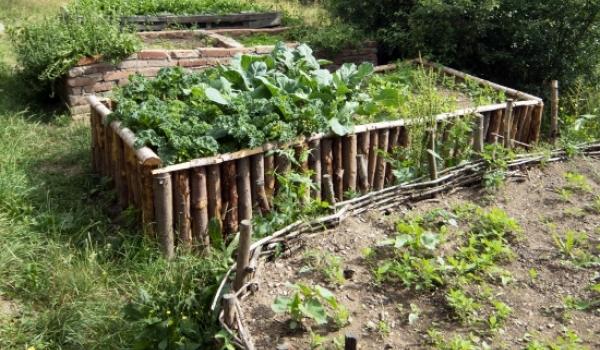 Vysoké záhony a zazimování zahrady - praktický workshop